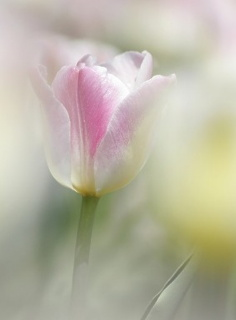 しっとり春に咲いた花