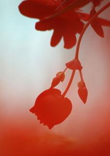 赤いシルエット