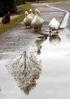 雨の日、フラワーセンターにて…