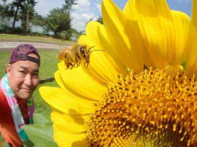 ヒマワリとミツバチと私