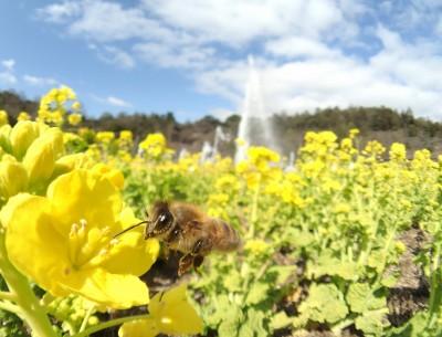 鼻でかミツバチ