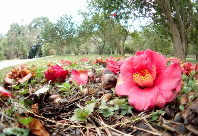 地面に咲いた花