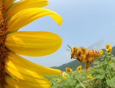花粉をまとって