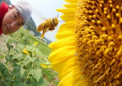 セイヨウミツバチさんと記念撮影