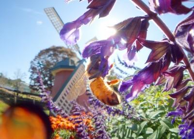風車とセイヨウミツバチさん