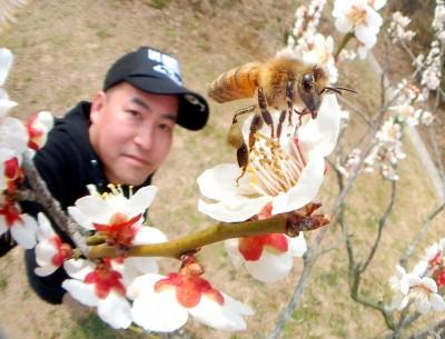 梅とミツバチと私