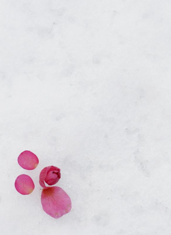雪の中に…