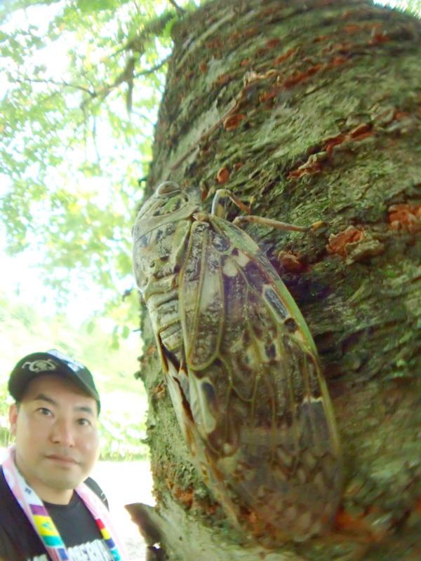 セミと木と私